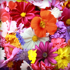 Order Flowers & Gifts