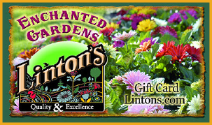 Linton's Gift Card